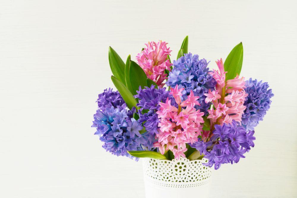 Hyacinth-Flowers-3