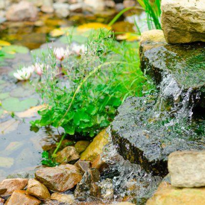 natural-pond-in-garden-QHF5CQ4