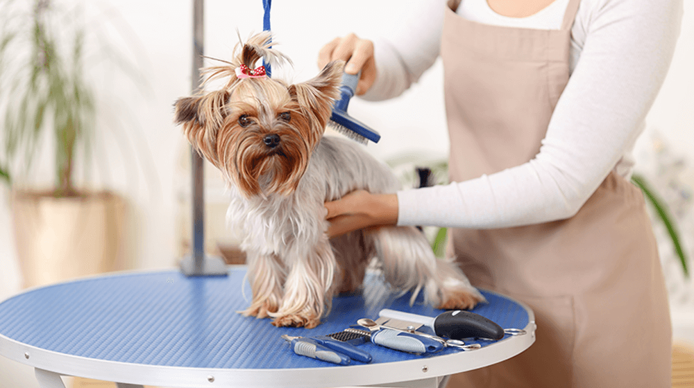 dog-grooming-business